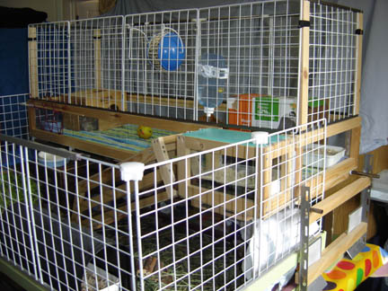 Guinea Pig Palace Overview