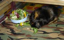 Xena Eating Greens